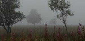 Fen in mist